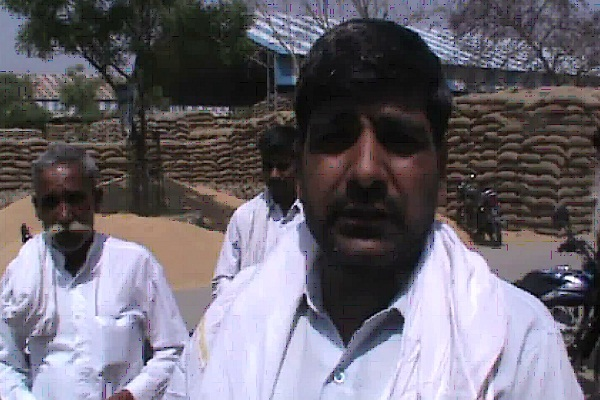 PunjabKesari, Palwal local news, Farmer, Wheat