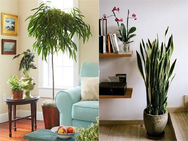 8 immortal house plants that beautify indoor spaces