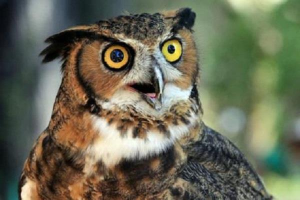 punjab police looking for the owls know why