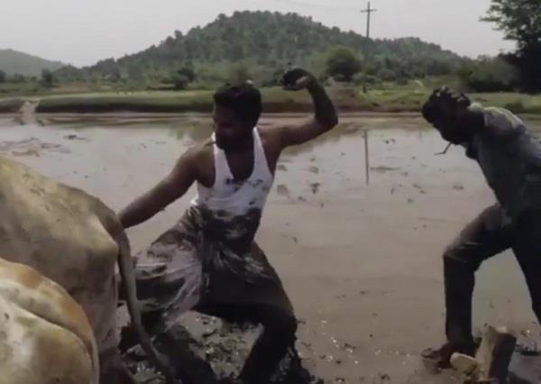 खेत में बैलों के साथ बनाया 'कीकी डांस चैलेंज' वीडियो, आप भी देखें