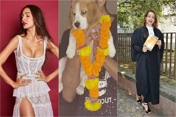 zomato boy stole malaika arora s divorce lawyer s dog