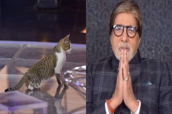 cat chilling on the sets of amitabh bachchan s  kaun banega crorepati