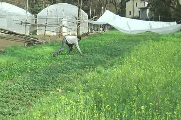 2 farmers in hamirpur have adopted zero budget farming