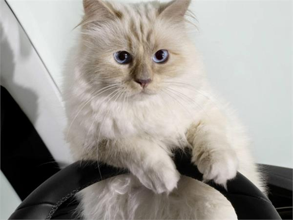 the world s richest cat owner of property worth rs 1385 crore