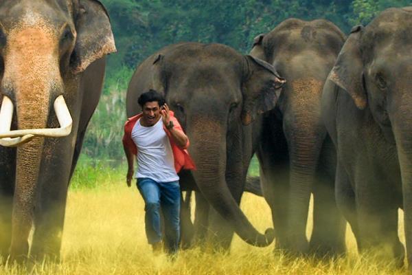 vidyut jammwal pulls off high risk action for junglee