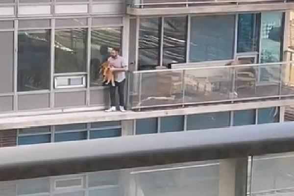toronto man scales building to reportedly rescue cat