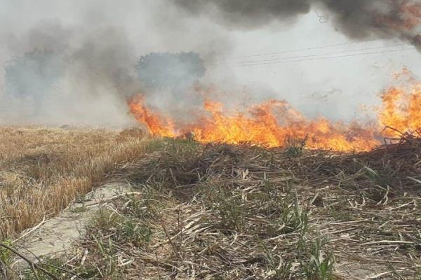 fire in fields of village dehra panipat