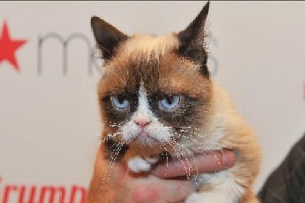 internet cat grappie facebook