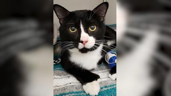 cat survives 45 minute washing machine cycle