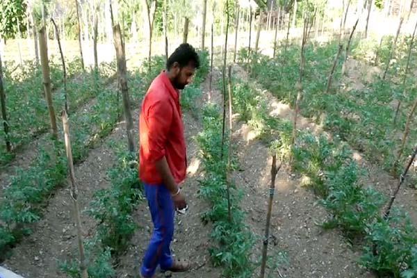 zero budget and organic farming