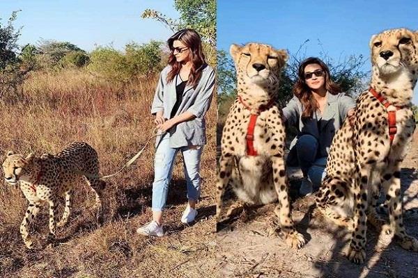 kriti sanon faces backlash for sharing photos with cheetah