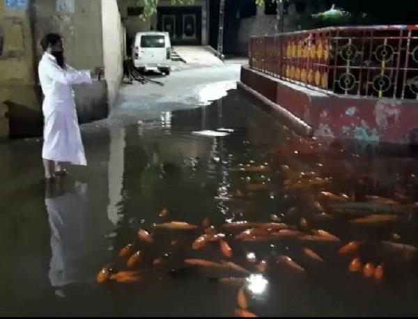 amazing sight in modi s kashi fishes seen floating on the road