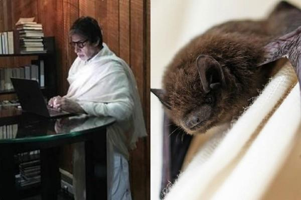 bats entered in amitabh bachchan house jalsa at night