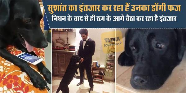 sushant pet dog fudge heartbroken after actors death manveer shares photo