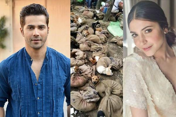 anushka and varun happy with banning dog meat in nagaland