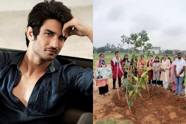 faridabad people planted saplings to fulfill sushant s dream