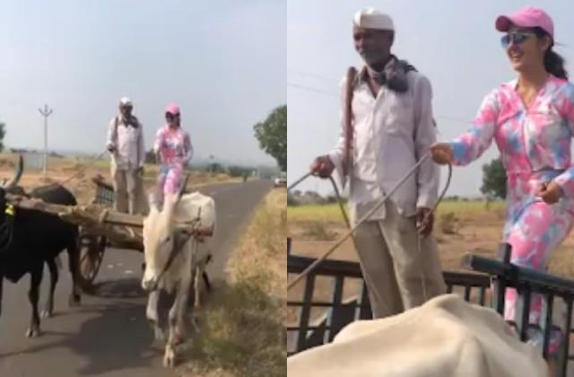 ashnoor kaur drove bullock cart video viral