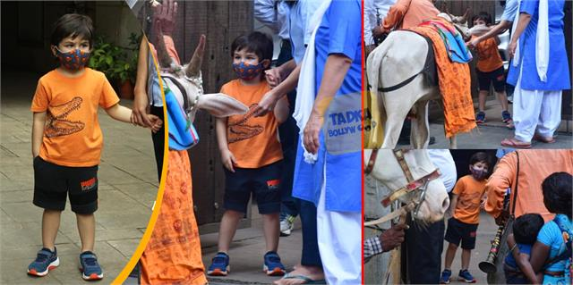 taimur ali khan meets cow mata outside his house at bandra