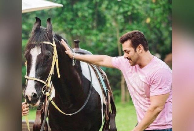 salman wants to buy  paramveer  horse but owner refused to sell