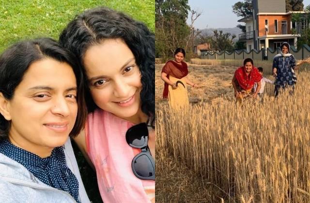 kangana ranaut sister rangoli participating in harvesting at her in laws house