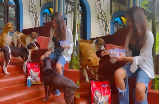 rhea chakraborty showers love to street dogs users trolled actress