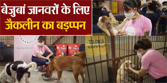 jacqueline fernandez reached animal shelter home with the team photos viral
