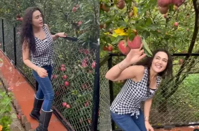 preity zinta showed her apple orchards to fans in video